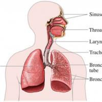 Remedios naturales para la bronquitis