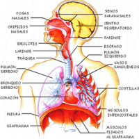 Medicina natural para disnea