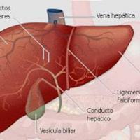 Grasas e hígado